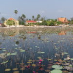 Bassin de lotus, Kampot, Cambodge