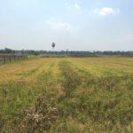 Rizières en campagne, Battambang, Cambodge
