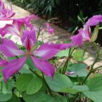 Fleurs, Jakarta, Indonésie