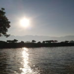 Buffles en bord de lac, Inlé, Myanmar
