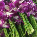 Orchidées, Flower Market, Bangkok, Thaïlande