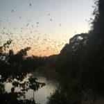 Les chauve-souris de la Bats Cave, Hpa-An, Myanmar