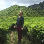 Tea plantations, Cameron Highlands, Malaisie