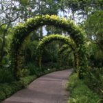 Jardin botanique, Singapour